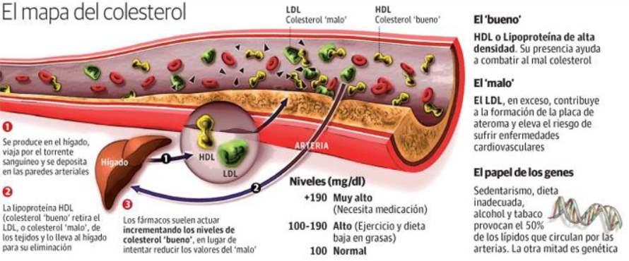 reducir colesterol consejos